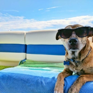 Cool Dog Wallpapers Top Free Cool Dog Backgrounds Wallpaper Access