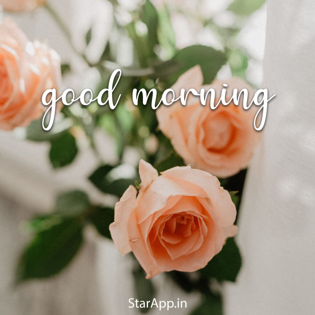 Good Morning Images With Flowers Hd & Morning Rose Flower