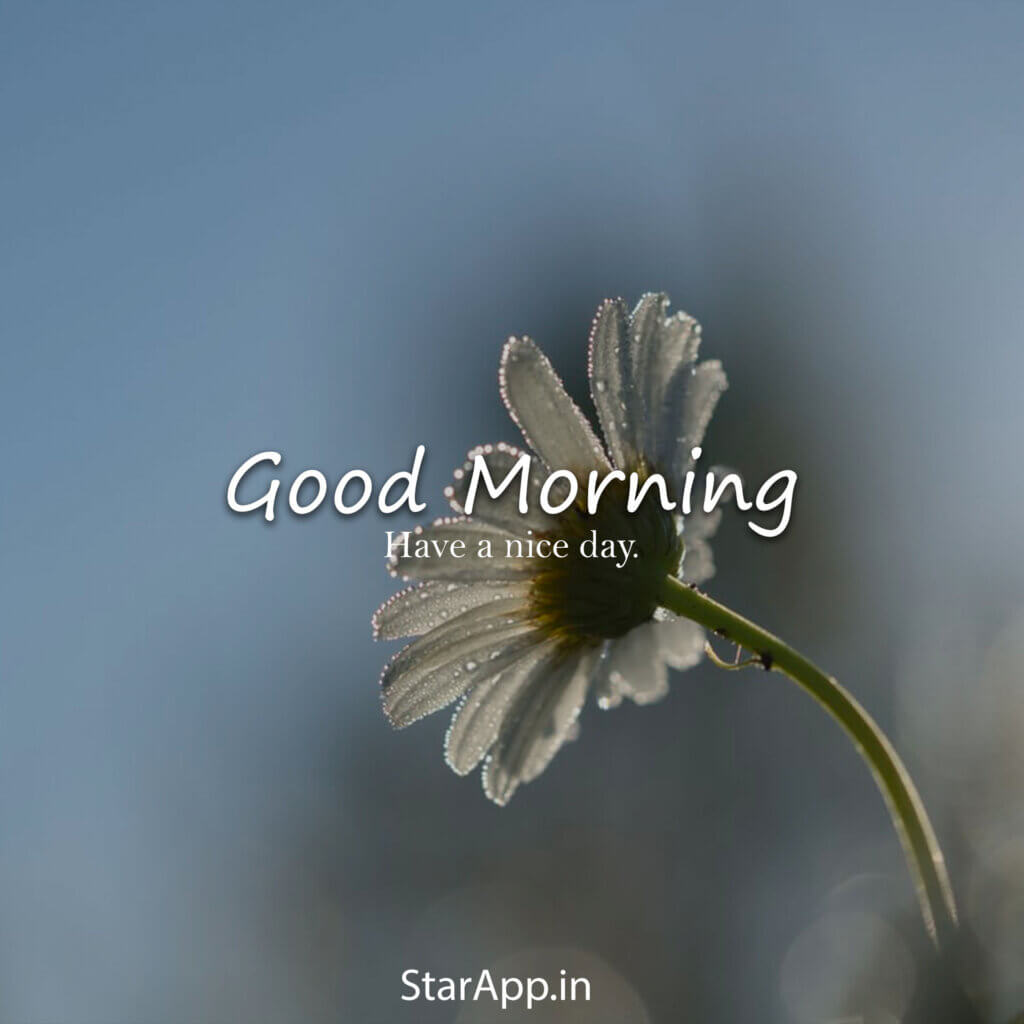 Most Beautiful Good Morning images with Flowers Hindi Status Good morning flowers Good morning images flowers Good morning beautiful flowers
